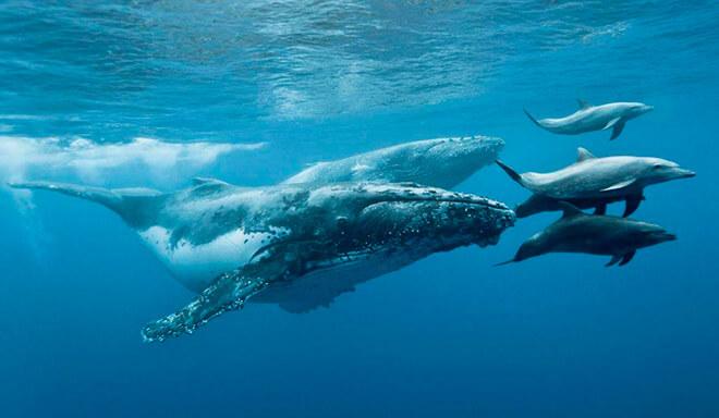 424 киты млекопитающие или нет