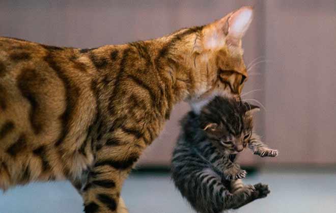 Если котенок рождается с уже открытыми глазами