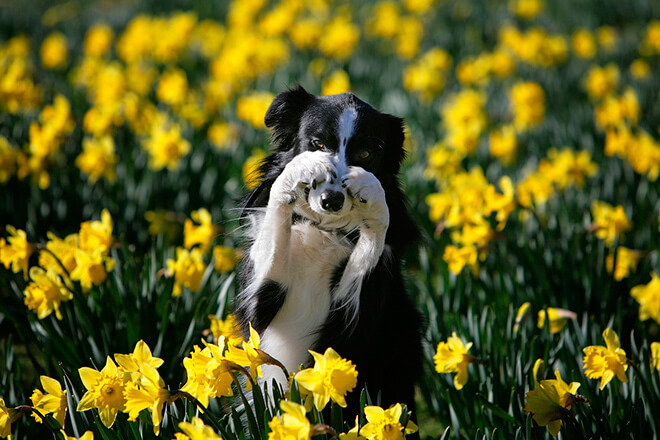 Аллергия у собаки