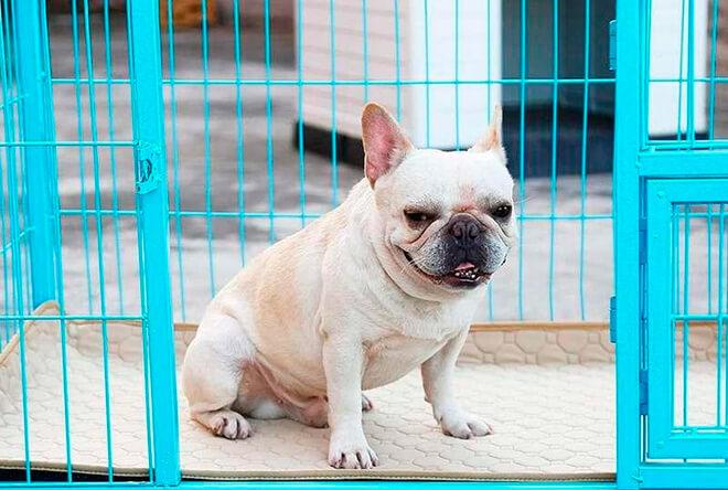 Как наказывать и поощрять собаку?