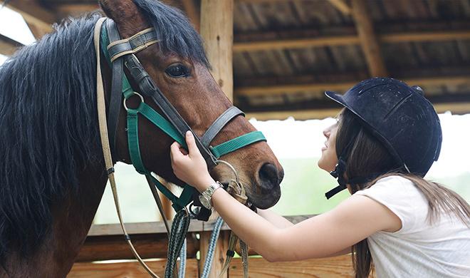 Как ухаживать за лошадью в домашних условиях?