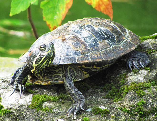 Топ - 20 интересных фактов о черепахах