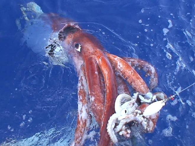 Питание глубоководных моллюсков