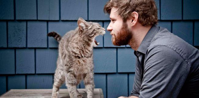 Опасность власоедов кошек для здоровья людей