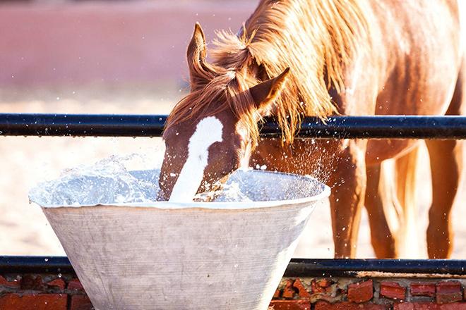 Как правильно давать воду?