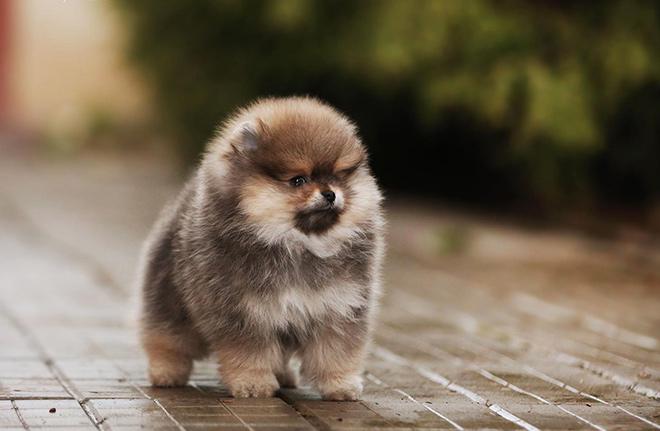 Рекомендации по выбору щенка