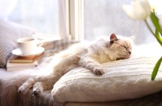 Кошки много спят