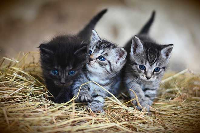 Как котята открывают глазки?