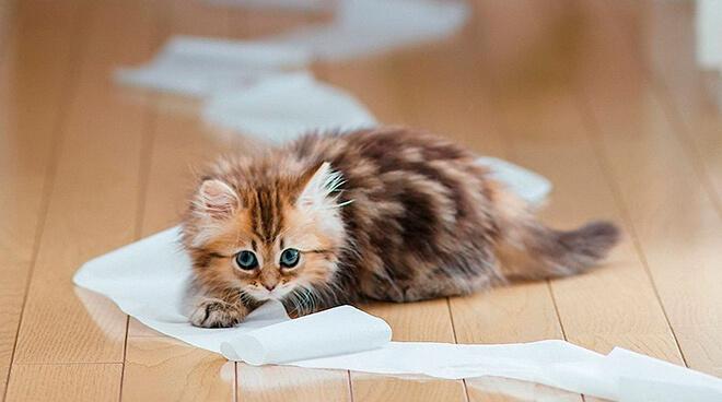 Почему котята гадят где попало?