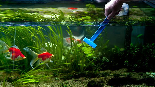 Домашний аквариум с рыбками