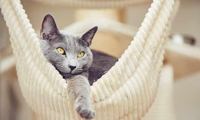 Изменения в поведении беременной кошки