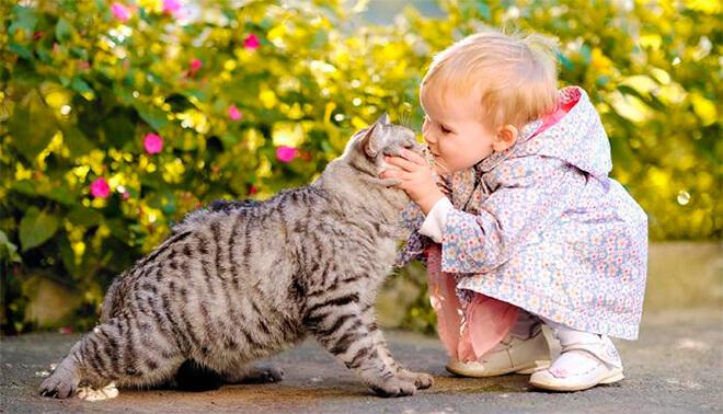 Дети и другие животные