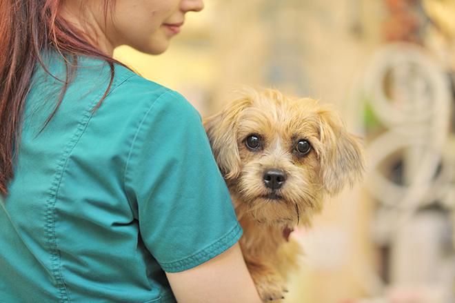651 хорошая ветеринарная клиника в москве