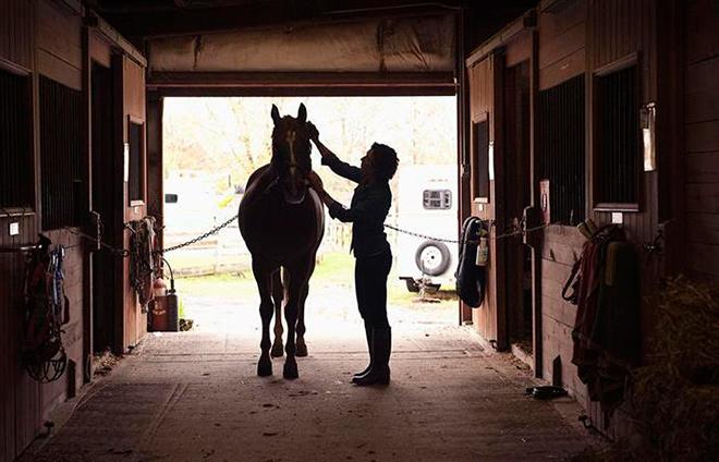 Топ - 10 фактов о лошадях