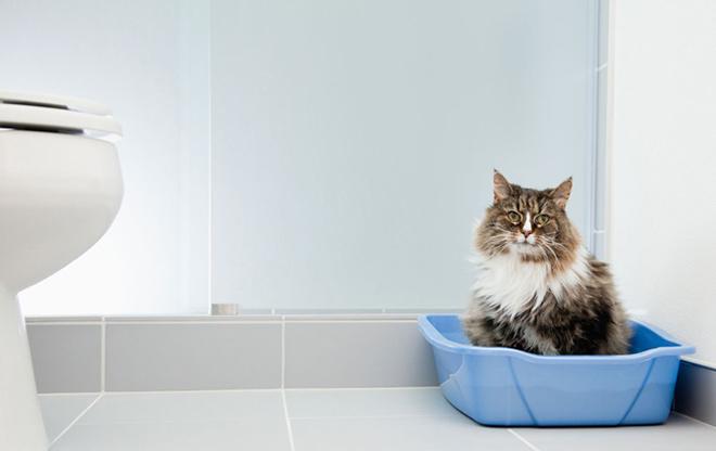 Почему появляется кровь в кале у кошки?