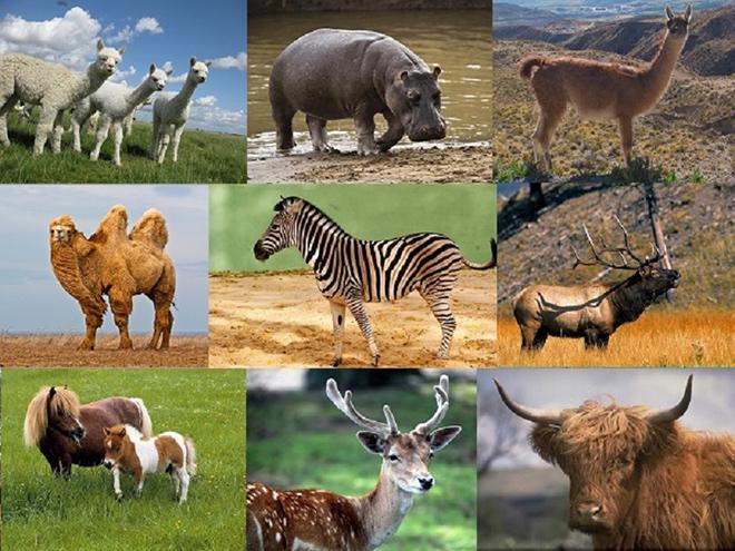 Особенности млекопитающих животных