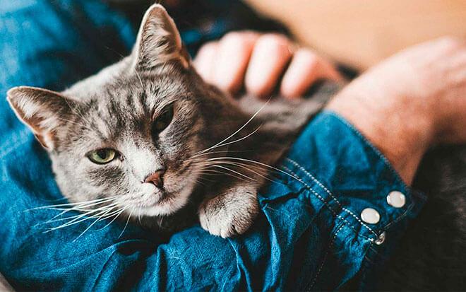 Отношения кошек и людей