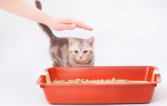 Топ - 12 советов по приучению котенка к лотку