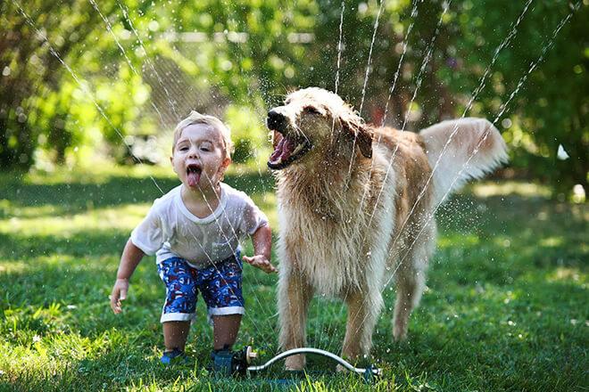 449 домашнее животное для детей