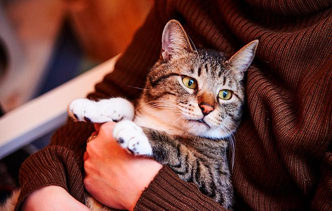 ТОП-10 самых красивых кошек
