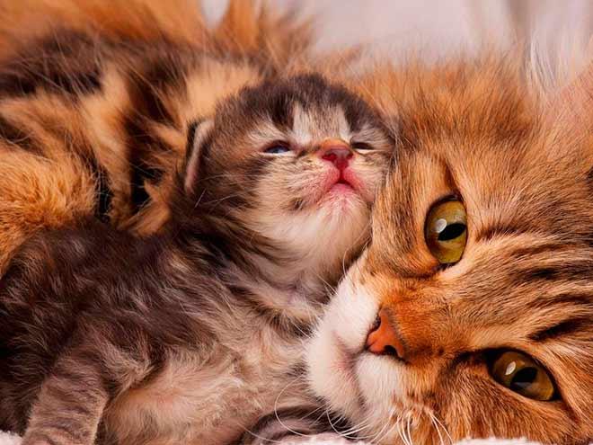 Сколько дней котята могут не открывать глазки?