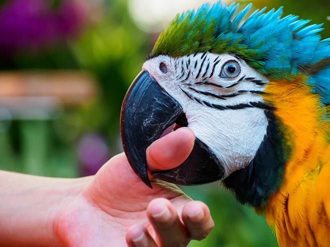 10 интересных фактов о попугаях