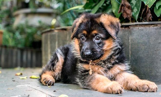 Суточная норма сухой еды для щенков и взрослых собак