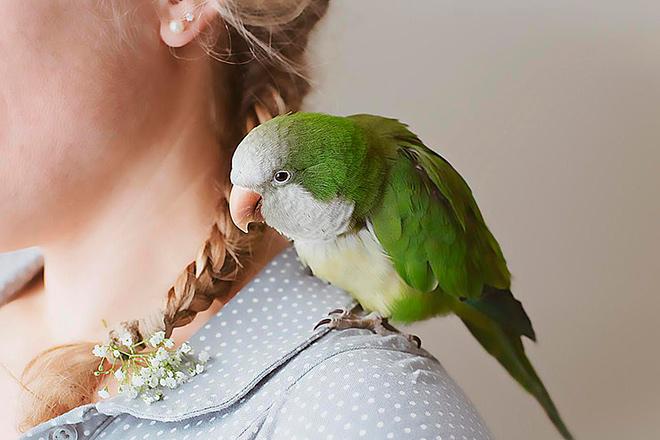 Кличка для попугая