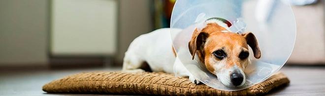 Диагностика в ветеринарной клинике