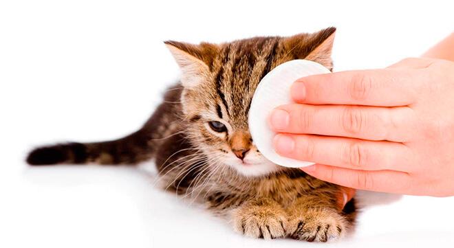 Чем промывать глаза кошке?