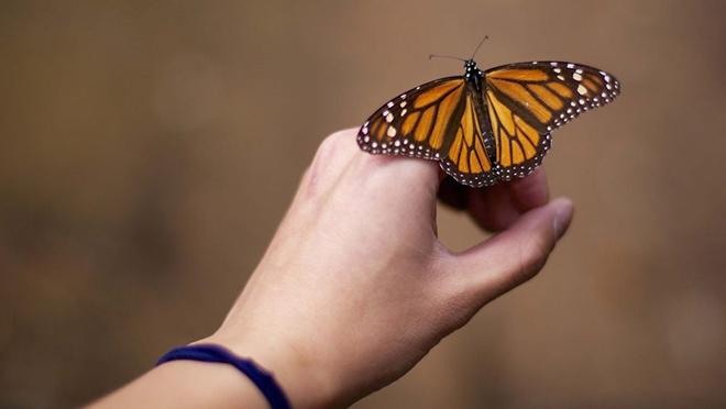 Какие виды бабочек бывает