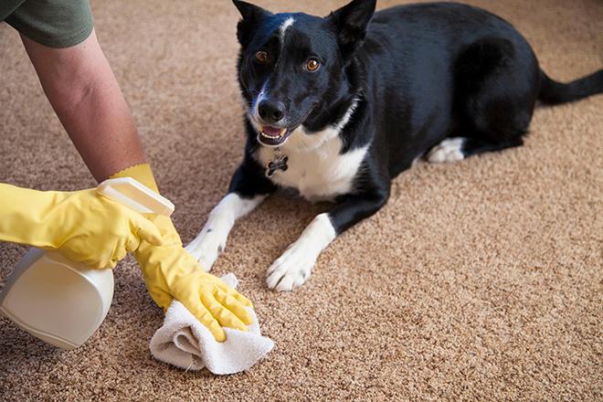 Причины нечистоплотного поведения в доме