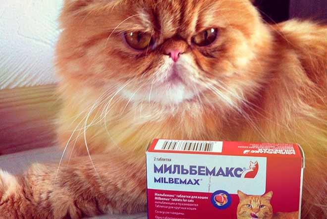 Отзывы о мильбемаксе для кошек