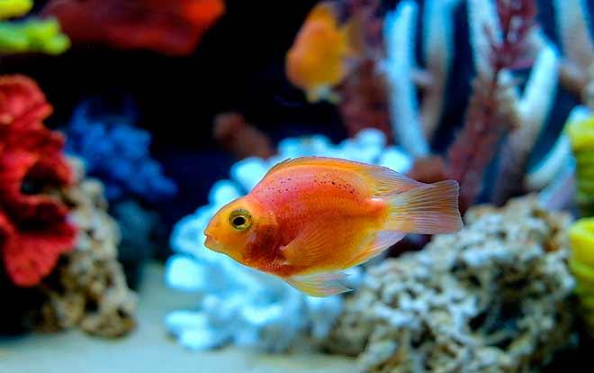 Совместимость в аквариуме