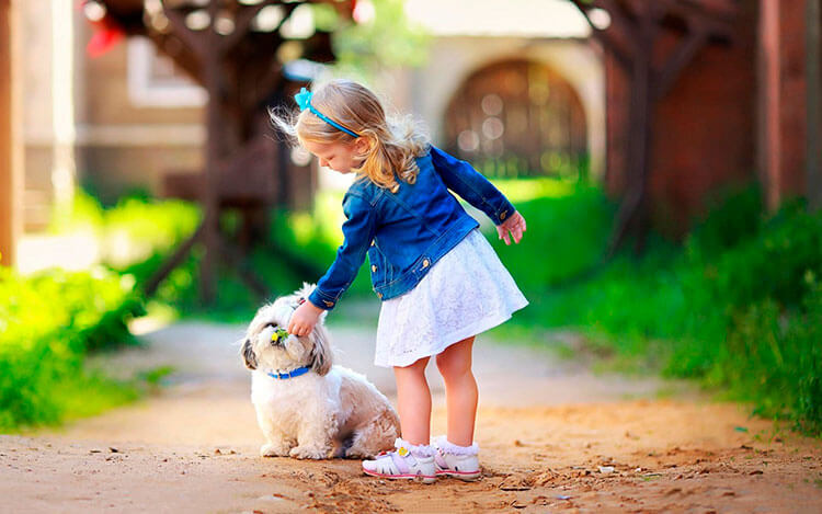 Породы маленьких пушистых собак: фото с названиями