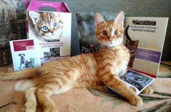 корма для кошек Pro Plan