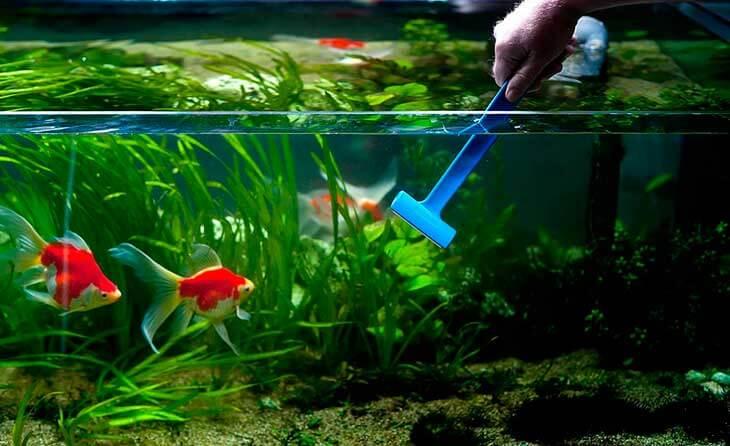 Почему вода в аквариуме становится мутной