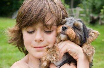 791 маленькая порода собак для детей
