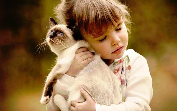 Кошки которые не линяют самые популярные породы