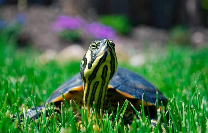 Как продлить жизнь черепахе?