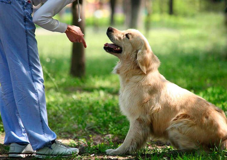 Как дрессировать собаку в домашних условиях?