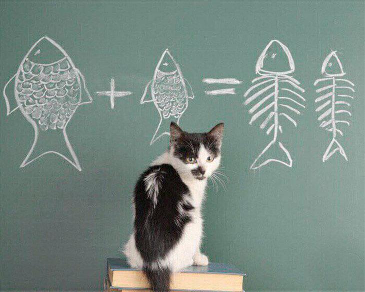 Натуральное питание для котят, кошек и котов