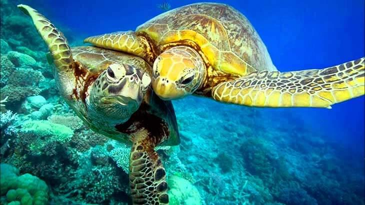 Немного о морских черепахах