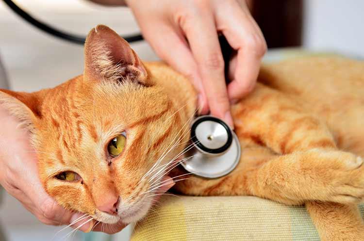 Лечение при патологии