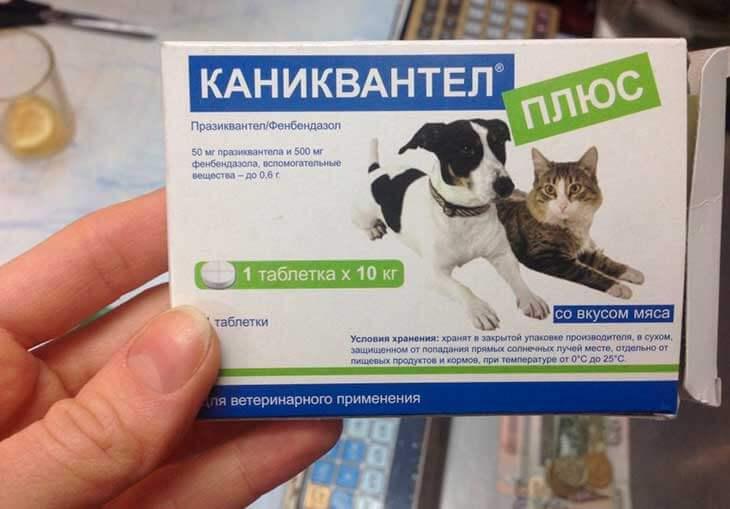 Каниквантел для собак: инструкция по применению, отзывы