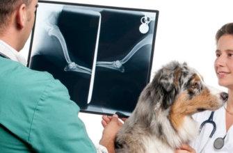Заболевание костей у собак