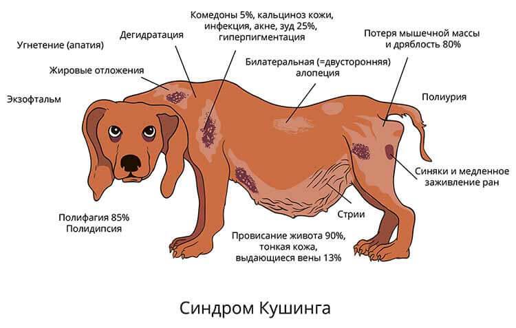 Симптомы заболевания у собак