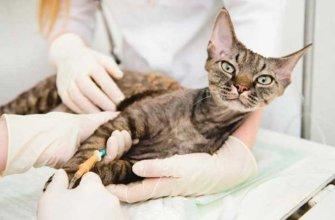 Кошка на осмотре у доктора