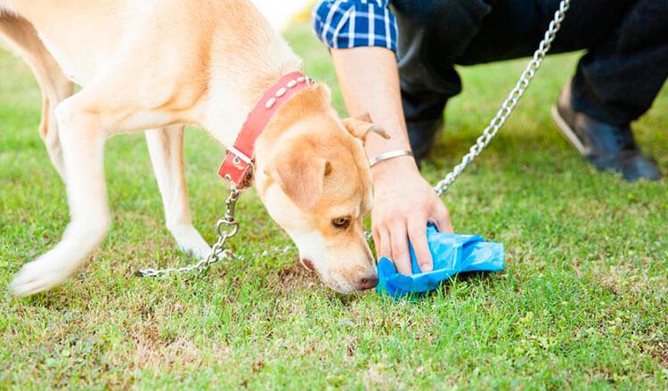 Откуда берутся глисты у собаки?