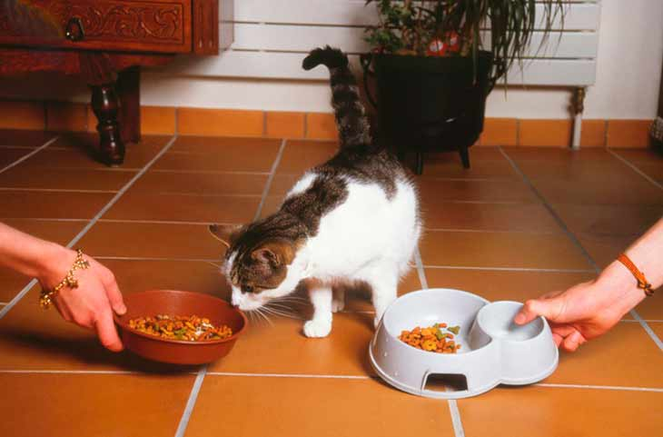Плюсы и минусы сухого корма для кошек